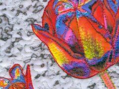 merrett-wintercolour-detail