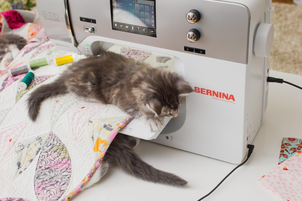 Bernina_Katzen_01_017_coated300