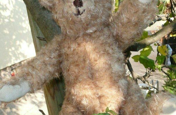 heidemaries teddy 7