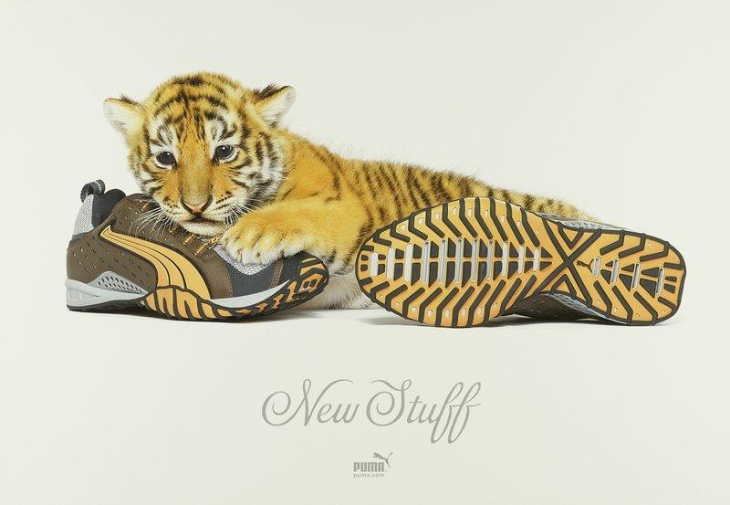 Puma New Stuff / Tiger, 2005 Foto: Andrew Zuckerman, Digitaldruck, 100,2 x 70,2 cm © Andrew Zuckerman & Puma Foto freundlicherweise vom Museum für Kunst und Gewerbe zur Verfügung gestellt