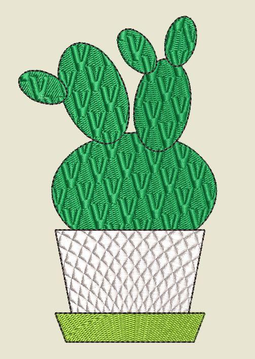 Kaktus 1 gesamt