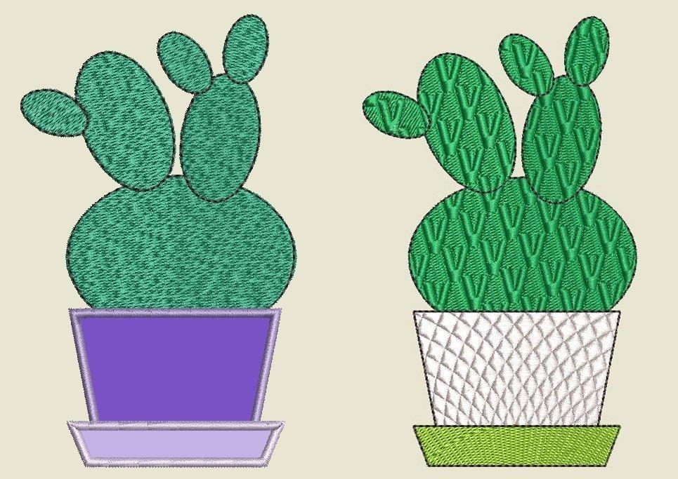 Kaktus 1Vergleich