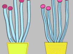 Kaktus 2 VorherNachher-Vergleich