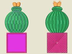 Kaktus 3 Vorher Nachher