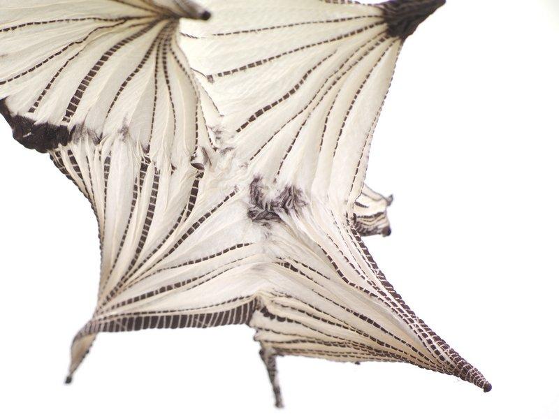 Tuchprobe mit shibori-Musterung aus der Museumssammlung: Das Spinnennetzmuster gibt es in zahlreichen Variationen. Der Stoff wird in langen Kegeln gefaltet und anschliessend mit Hilfe einer Hakennadel abgebunden. Das Ergebnis ist ein filigranes Muster, das an Spinnennetze erinnert. Foto freundlicherweise vom Museum zur Verfügung gestellt