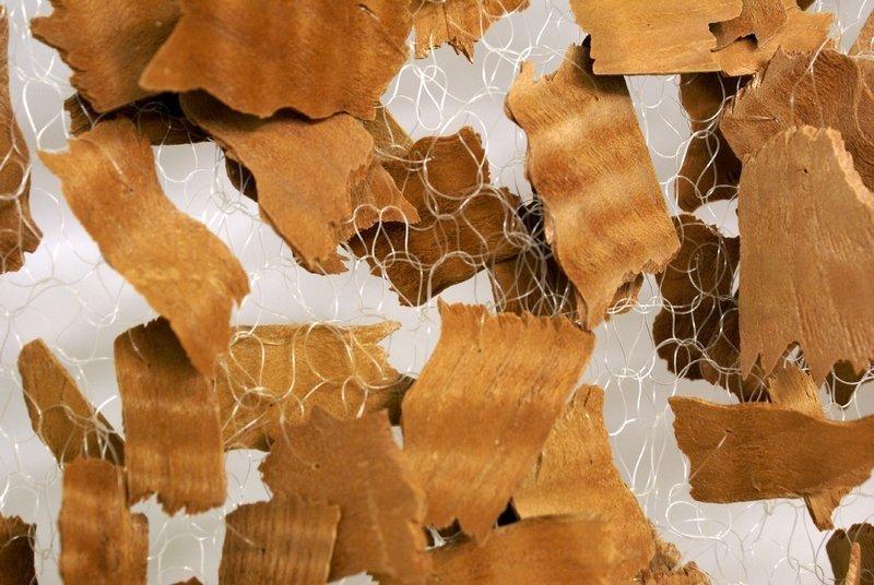 Maja Andrey: Blickfänger Redwood, Detail