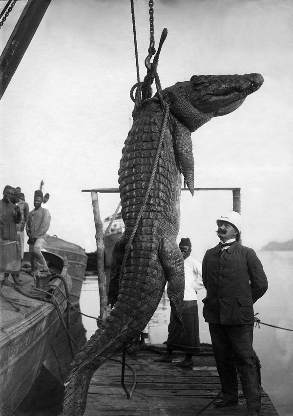 Otto Haeckel, Der Reichstagsabgeordnete Hermann Dietrich mit einem erlegten Krokodil, Deutsch-Ostafrika, 1906 © ullstein bild Foto freundlicherweise vom Museum zur Verfügung gestellt