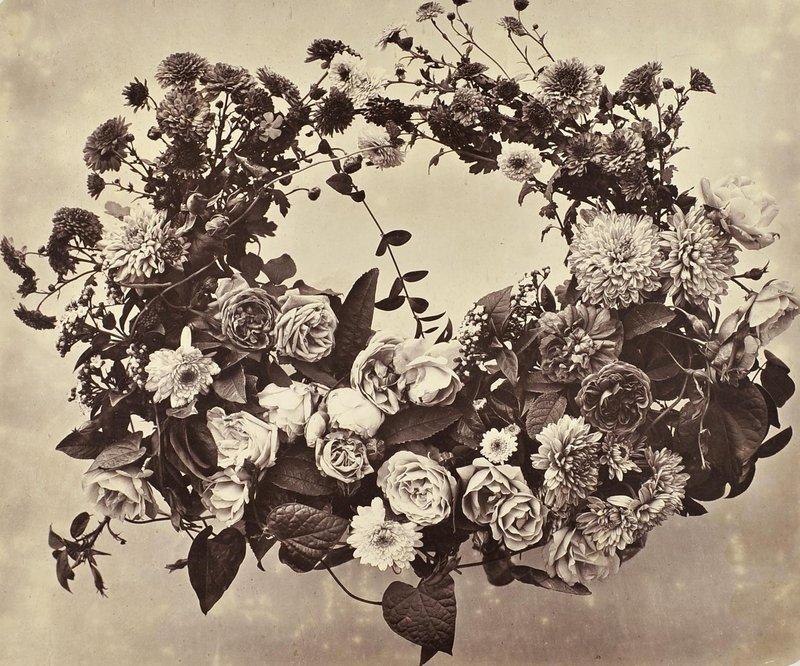 Adolphe Braun, Kranz mit Chrysanthemen und Rosen, um 1854, Albuminpapier © Sammlung Serge Kakou Paris