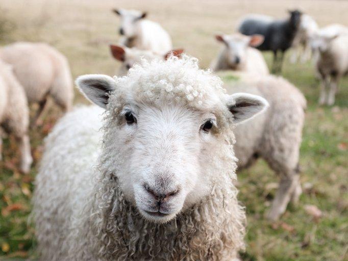 100 Prozent Wolle © Sam Carter Foto freundlicherweise vom Museum zur Verfügung gestellt