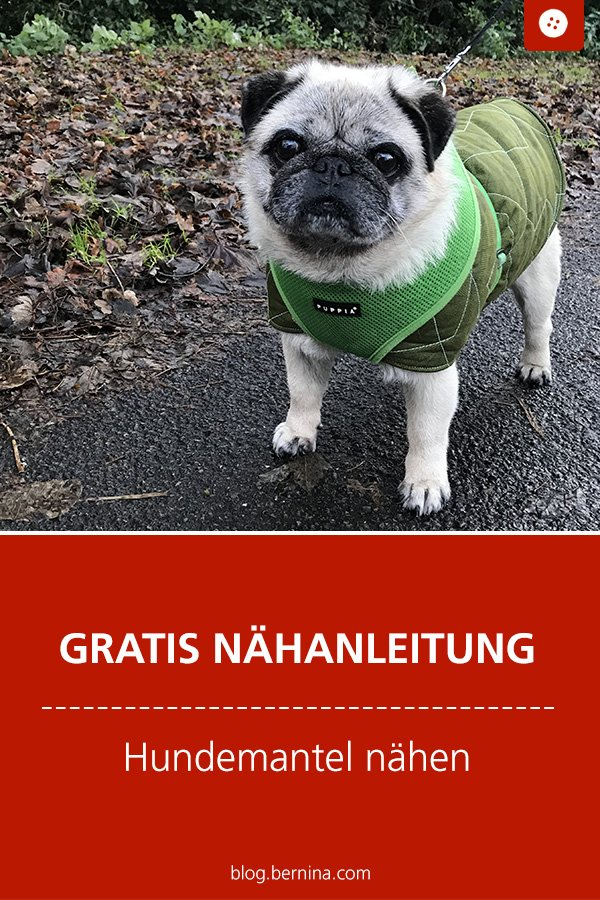Kostenlose Nähanleitung: Hundemantel nähen