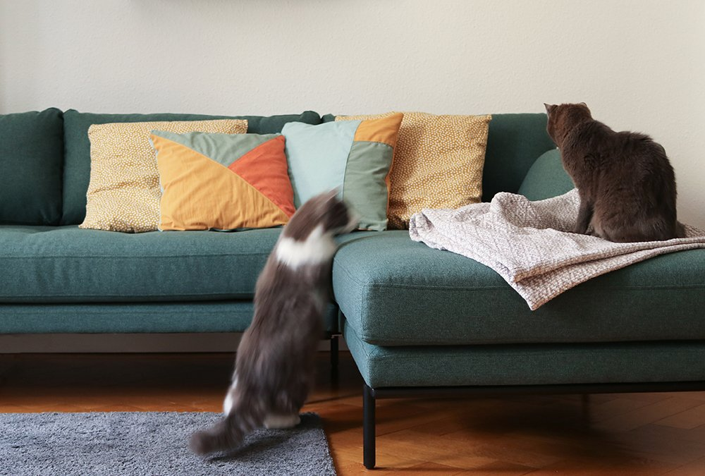 Katze springt auf Sofa