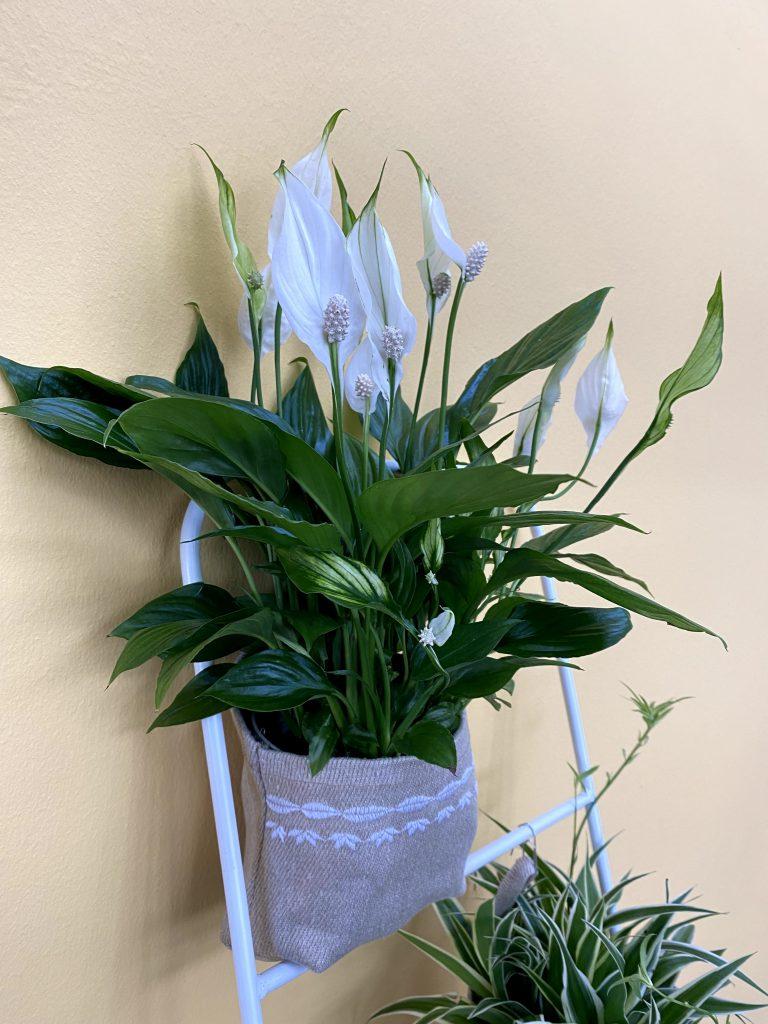 Plant Bag Wettbewerb