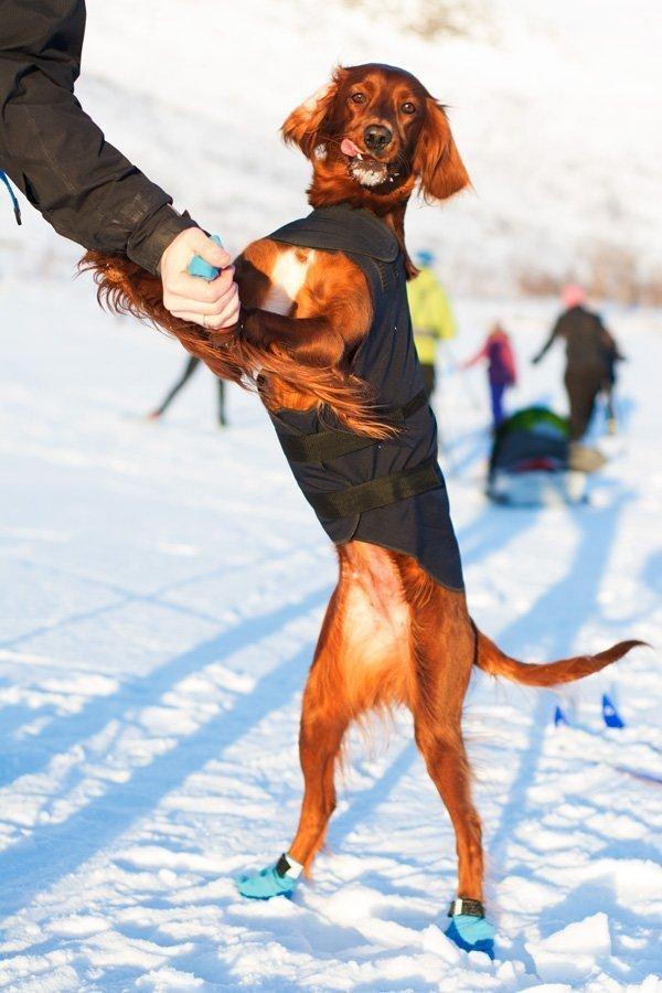 Sew Mariefeur Bernina Dog Coat