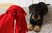 Easy instructions for sewing a plastic bottle dog toy