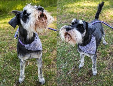 Turn fabric scraps into a bandana to gift your pet