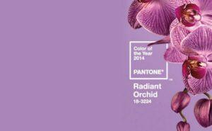 trendkleur 2014 orchidee