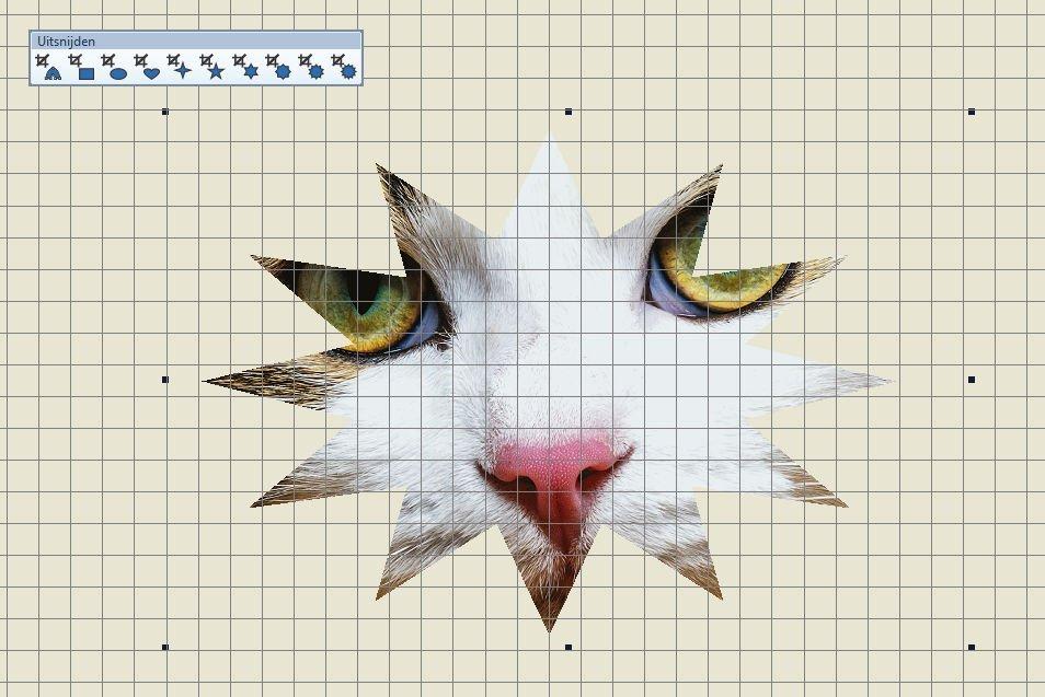 12puntigesterkat