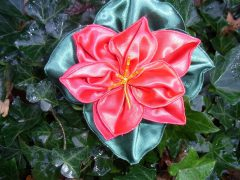 How to make beautiful poinsetta stars and flowers